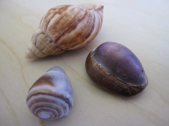 Maui shells