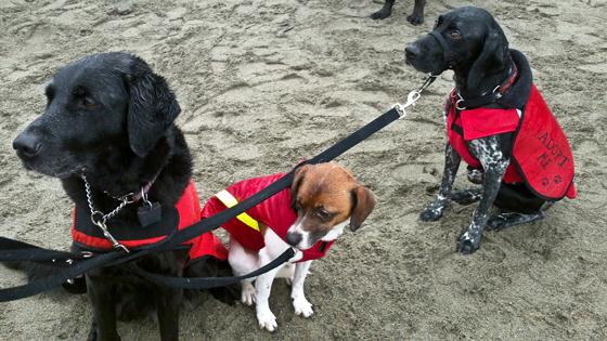 Rally dogs