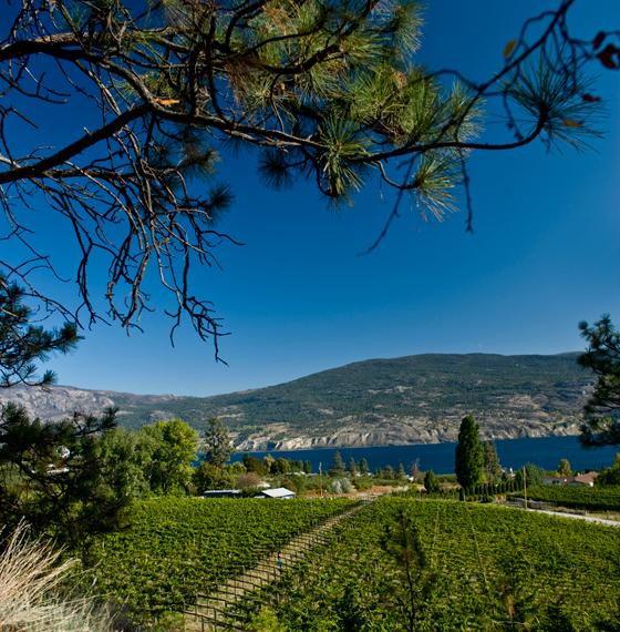 Haywire Vineyard in summer