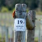 Okanagan Wineries, Part Two