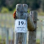 Okanagan Wineries, Part Two