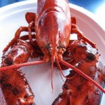 Cruising for Lobsters in Shediac Bay