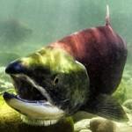 VanAqua: After Hours at The Aquarium