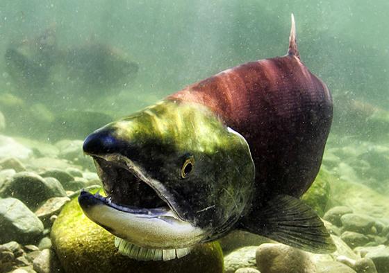 Van Aquarium fish