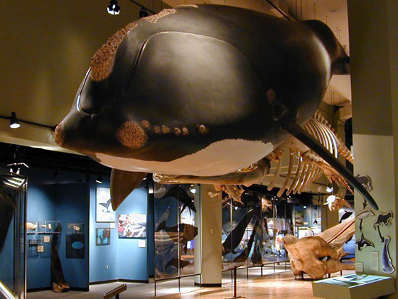 Hall of Great Whales