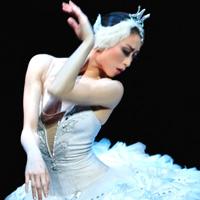 Swan Lake dancer