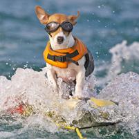 waterskiing dog
