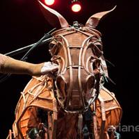 Joey the Warhorse