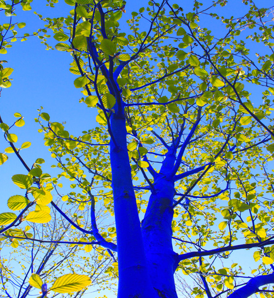 Blue Trees installation at Biennale