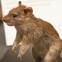Museum of Vancouver Rewilding