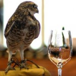 Burrowing Owl Estate Winery Ensures Bright Future for Endangered Wildlife