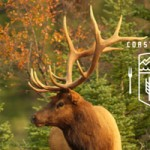 A Boreal Feast with Tourism Yukon and Edible Canada
