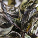 Tea Tasting Time with Tea Association of Canada and Forage Vancouver