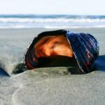 Surf's Up at Tofino's Long Beach Lodge Resort!
