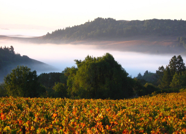 Fog in Calif Vineyard; photo California Wine institute