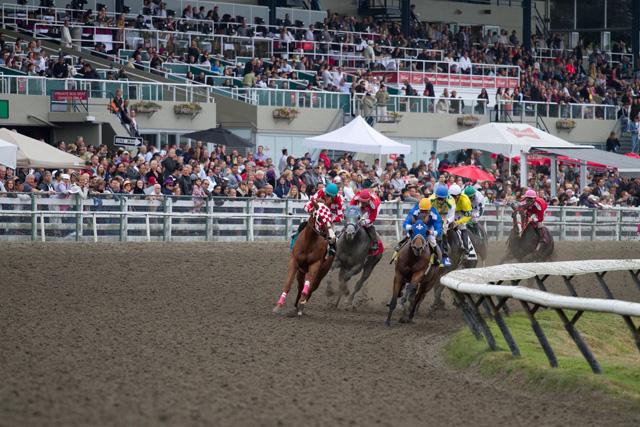 Hastings horse races
