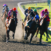 Hastings horse races