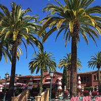 Palms trees, San Diego, CA