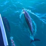 Kauai Adventures: Star Na Pali BBQ Snorkel with Capt. Andy's