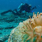 Learn Underwater Photography, Scuba Techniques at Vanaqua's Divers' Weekend