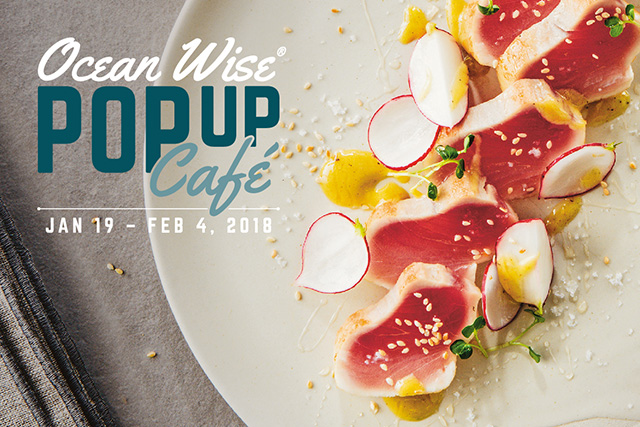 OceanWise Pop-up Cafe, Vancouver
