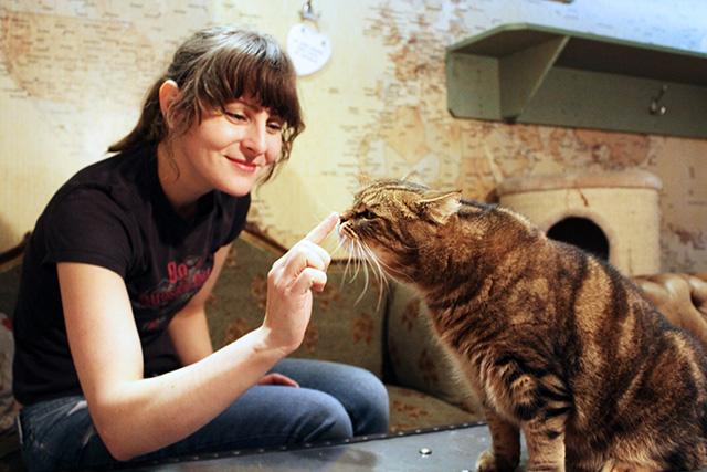 Lady Dinahs Cat Emporium