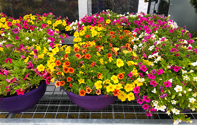 PC Garden Centre flowers