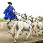 Spotlight on Hungary: The Noble Horsemen of the Puszta
