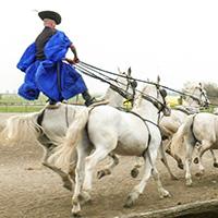 The Noble Horsemen of the Puszta