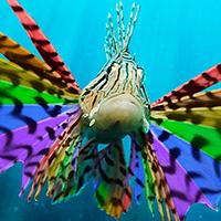 Rainbow Lionfish
