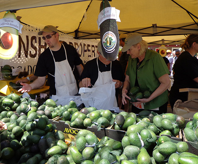Photo courtesy Fallbrook Avocado Festival