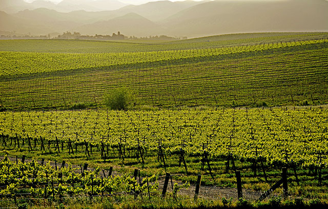 SLO vineyard, California