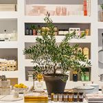 goop MRKT Toronto Arrives on June 7