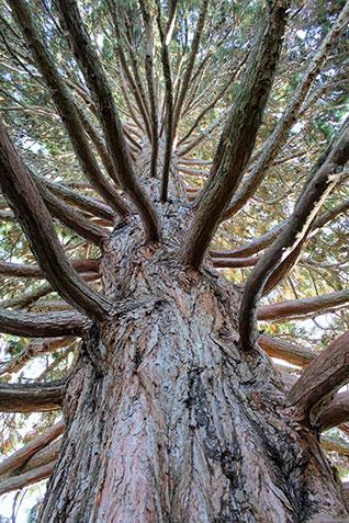 Secret Climbing Tree