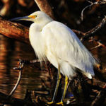Mazatlán Offers a Bird-Watcher's Paradise