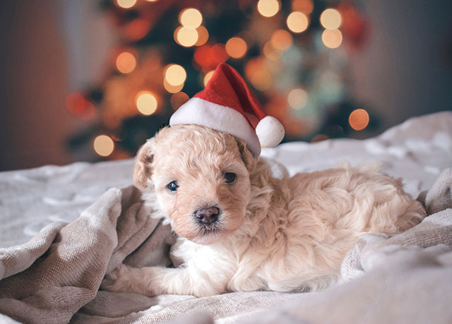 Holiday Tips for Pet Owners