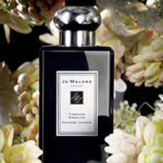 Holiday Scent Spotlight: Jo Malone London Tuberose Angelica Cologne Intense