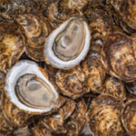 Savour PEI at Home with Cascumpec Bay Oysters