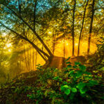 7 Ways to Enjoy Lithuania's Forests