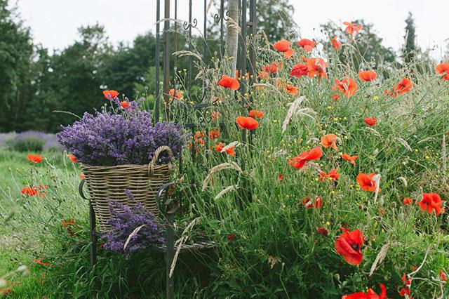 Tuscan Farm Gardens; photo Sharalee Prang