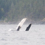 On an Adventure with Campbell River Whale Watching