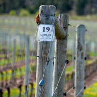 Okanagan Merlot vineyards
