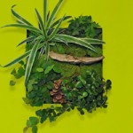 By Nature Design Wallflower Living Frame CONTEST