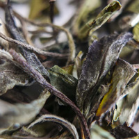 Green tea leaves, Vancouverscape