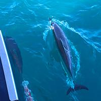 Capt Andys snorkel tour, Kauai