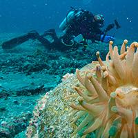 Vancouver Aquarium Divers Weekend