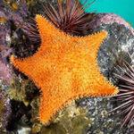 Heart of the Coast Explores British Columbia's Marine Biodiversity