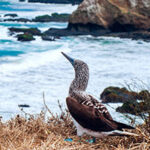 Kontiki Expeditions Launches Two Ecuador Itineraries This Summer