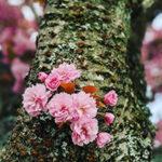 BC Blossom 2021 Photo Watch