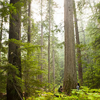 Forest bathing, Vancouver